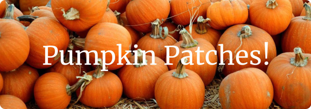 Pumpking Patches!